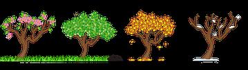 seasons-158601__180ZOMER HERFST